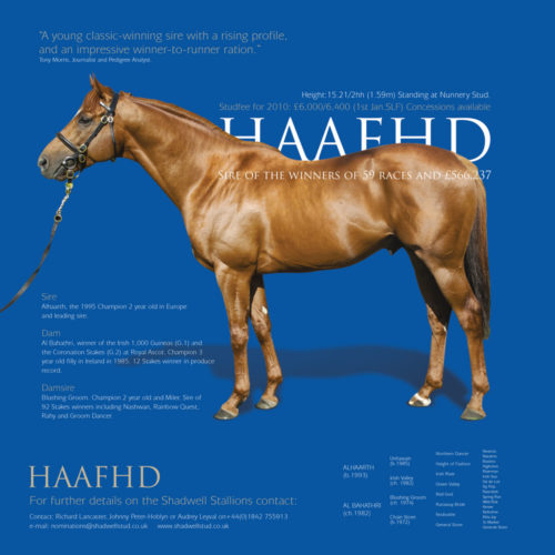 shadwell stud brochure design